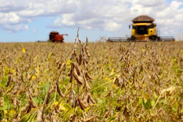 Conab não vê grandes compras de milho e soja pelo Brasil apesar de isenção de taxa